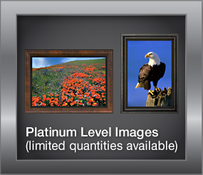 Platinum Level Images