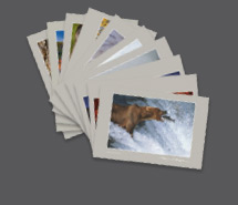 Art Card Assortments