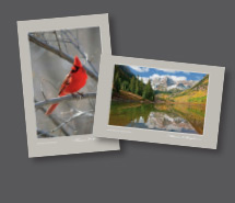 Art Card Sets