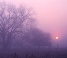 Purple  | Pink tones