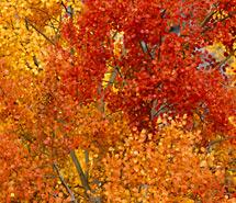 Red | Orange tones