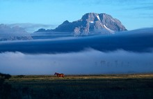 Horse and Mount Moran