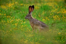 The Wild Garden - Jackrabbit
