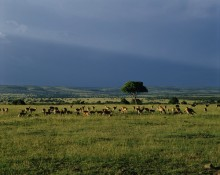 African Countryside - Impalas