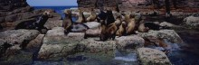 A Family Portrait - Sea Lions
