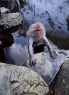 The Monkey Prince - Snow Monkey