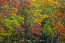 Autumn in the Smokies | Open Edition Art