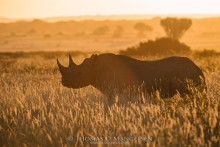 Profile of an Icon | Saving the Wild Collection