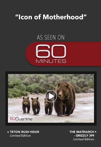 Into the Wild with Thomas D. Mangelsen as seen on 60 Minutes with Anderson Cooper