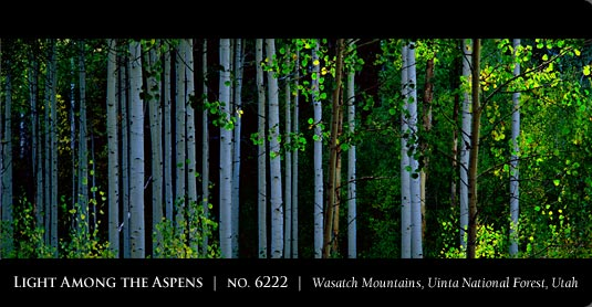 MANGELSEN Images of Nature Gallery in Park City, Utah
