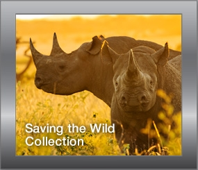 Saving the Wild Collection