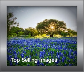Top Selling Images