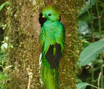 Quetzal | Toucan