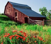 Rural | Barns