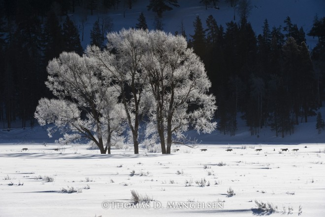 Druids' Frosty Morning Passage | Legacy Reserve Collection