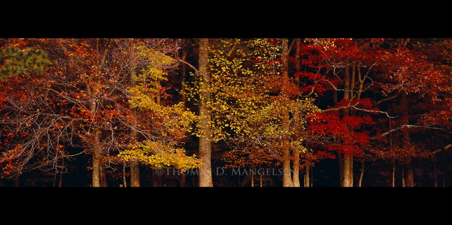Colors of the Smokies | Legacy Reserve Collection