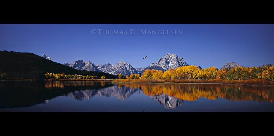 High Noon on the Oxbow Bend - Bald Eagle and Osprey