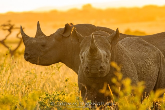 The Golden Hour | Saving the Wild Collection