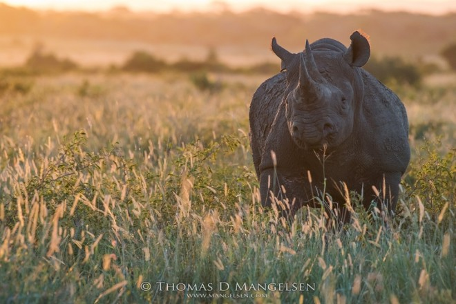 Field of Dreams | Saving the Wild Collection