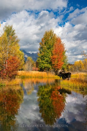 Indian Summer at the Pond