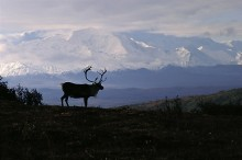 Caribou Country | Artist Proof Collection