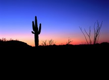Nightfall over the Sonoran