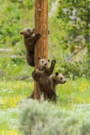 Teton Pole Dancers