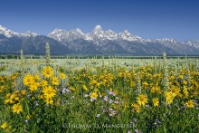 Mule's Ears and Tetons