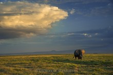 Magic of Amboseli