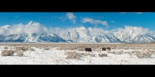As the Snow Deepens - Grizzly 399