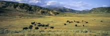 Valley of the Bison