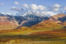 Denali Autumn | Open Edition Art