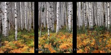 Aspens of McClure Pass
