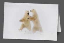 Polar Dance | Art Card Set