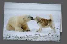 Polar Kiss | Art Card Set