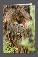 Heart of the Cottonwood | Art Card Set