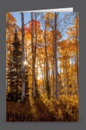 Kiss of Autumn | Art Card Set