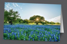 Bluebonnet Morning | Art Card Set