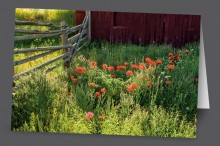 Poppies at the Homestead | Art Card Set