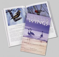 Winter Wings:  Birds of the Northern Rockies