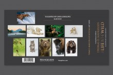A Life in the WIld Art Card Set