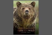 A Life in the Wild Poster
