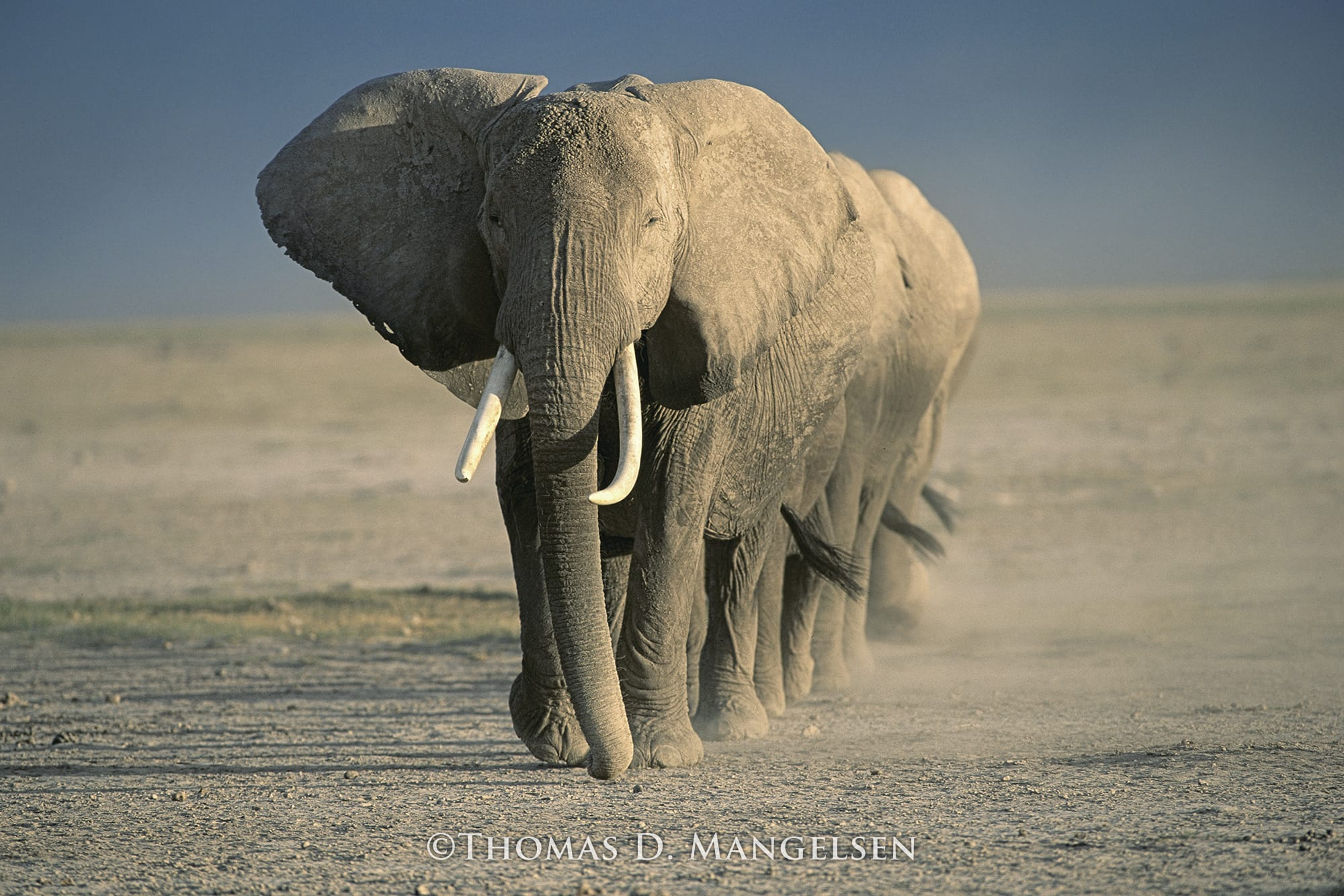 Amboseli Crossing